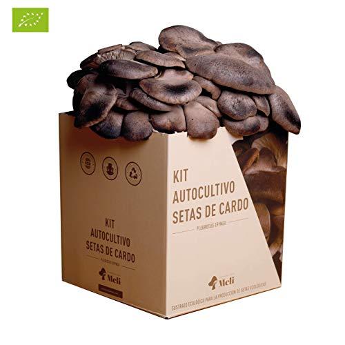 Con nuestro Kit de Autocultivo para la producción de setas ecológicas de cardo (Pleorotus eryngii), puedes cultivar hasta 2 kilogramos cómodamente en su hogar ya que no hay mejor forma de conocer y disfrutar la naturaleza que desde casa observándola ...
