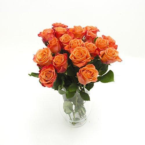 10-orange-roses-en-bouquetenviron-30-jusqu-40cm-frais-partir-de-depuis-grtnertrs-bien-convenable-com