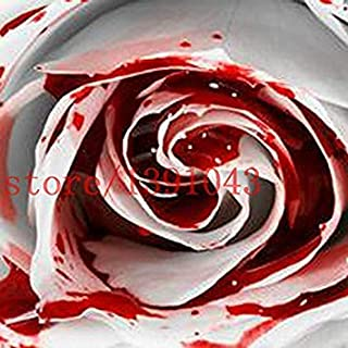 Fash Lady 200 STÜCKE ROSEN SAMEN Seltensten Weißen Blut Rose Pflanze Blumensamen Blume Garten Asaka Seltene Wahre blume für hausgarten