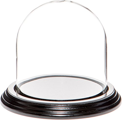 PlyMor Marke 10,2 x 10,2 cm Display Glas Dome Cloche Black Wood Veneer Base