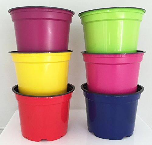 Nutley's Coloured Plant Pots, 12cm (24) Test