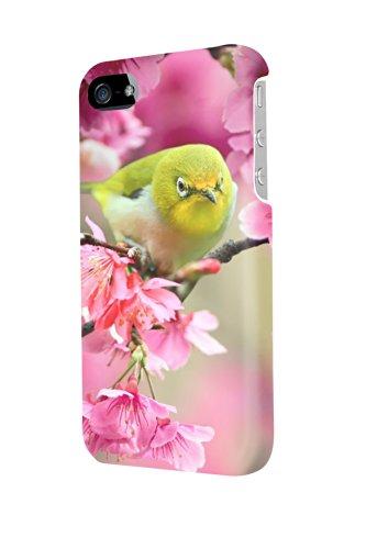 IP40724lovely Japanese White Eye Bird custodia lucida per iPhone 4/4S