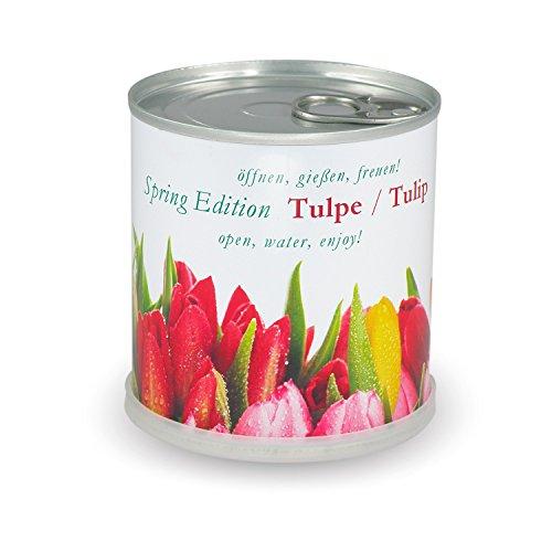 blumen-in-der-dose-spring-edition-tulpe