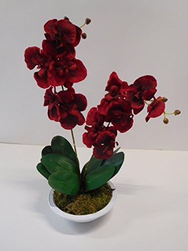 Ziegler Orchidee Phalaenopsis 2 Rispen Kunstpflanze Dekopflanze 60 cm Rot Bordeaux 1017101-01 getopft F73