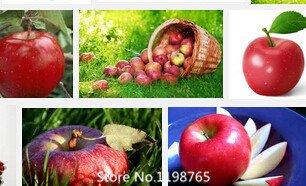 PROMOTION de 30 graines de noix de cajú de Apple Plante Anacardier Tree Planting Seeds de nouveau et frais Graines de fruits roman de semences