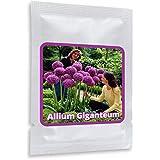 Aglio gigante (Allium Giganteum) - 30 semi / pacco - aglio decorativo, grandi dimensioni