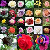 NooElec Seeds India 40 Variety Mix Color Rose Seeds - Pack of 60 Seeds