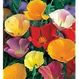 Go Green California Poppy Eschelozia Mixed Seeds (Pack of 50 Seeds)