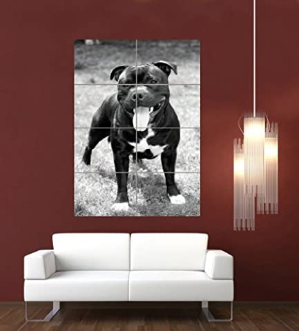 STAFFORDSHIRE BULL TERRIER STAFFIE STAFFY DOG GIANT ART PRINT POSTER PICTURE G1068