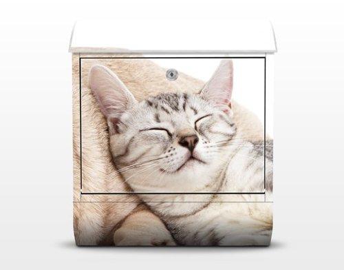 Design Briefkasten Katzen Haustiere, Postkasten mit Zeitungsrolle, 46cm x 39cm