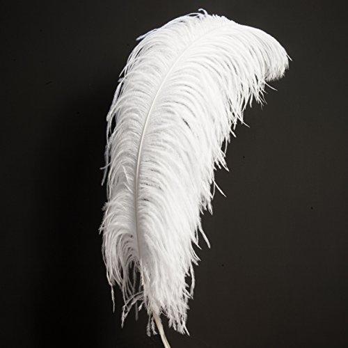 Natur STRAUSSENFEDER Weiss 60-70cm lang – Dekofeder, Karneval, Massage, Bastel Bedarf, DIY - Rosemarie SCHULZ HD Heidelberg