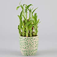 Ferns n Petals 2 Layer Bamboo Plant in Ceramic Pot (Green)