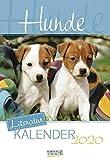 Hunde 2020: Literarischer 2-Wochenkalender * 2 Wochen 1 Seite * literarische Zitate und Bilder * 16,5 x 24 cm