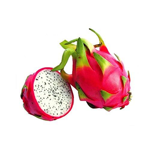 caracteristicas:PLANTA DETALLE: 1 planta de entre 3 y 8 pulgadas en una olla profunda 3 pulgadas.PLANTA DE youtself: Haga crecer su propia fruta deliciosa! Crecer deliciosa fruta en su propio jardín!REPORTAJE: ¿Puede cultivarse en interiores!PLANTA f...