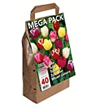 Greenbrokers bulbi di tulipano, diversi colori, confezione da 45