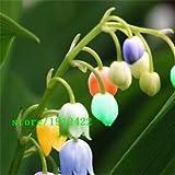 Pinkdose planta de la orquídea Phalaenopsis, semillas libres del Ph plantar flores de interior 100seeds: Amarillo