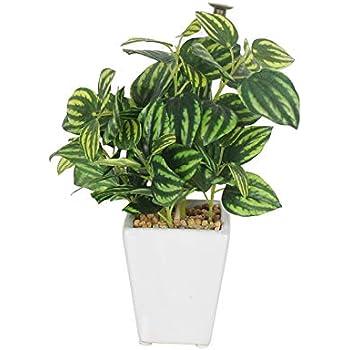 Fourwalls Range Mini Artificial Wandering Plant Ceramic Vase(19 cm Tall, Green, DESIGM-A)