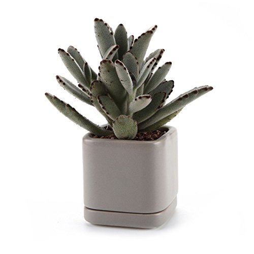 t4u-vaso-e-sottovaso-per-piante-in-ceramica-75-cm-per-piante-succulente-o-cactus-colore-beige-no8