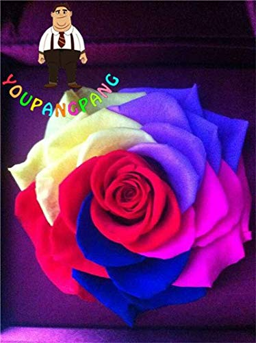 Shopmeeko Exotische Regenbogen Rose Pflanzen Seltene Mischfarben Rose Pflanzen Bonsai Blume Pflanzen Black Rose Seltene Balkon Pflanze Hausgarten 200pcs / B: 1