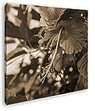 deyoli schöner Roter Hibiskus Format: 40x40 Effekt: Sepia als Leinwandbild, Motiv auf Echtholzrahmen, Hochwertiger Digitaldruck mit Rahmen, Kein Poster oder Plakat