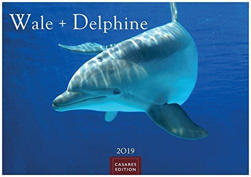 Wale und Delphine 2019 S 35x24cm