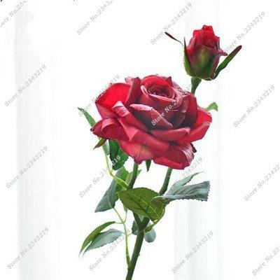 Exotique Miniature Bonsai Fleur Rose Rosas Graine Bricolage jardin et maison embellissant de purification d'air 110 Pcs/Sac 11