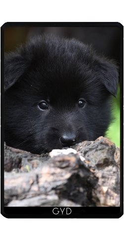 funda-para-kindle-fire-7-pouces-2012-version-animales-perro-del-bebe-by-wonderfuldreampicture