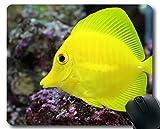 Mauspad-Spiel, tropisches Fischthema Voll von der Persönlichkeitsmausunterlage