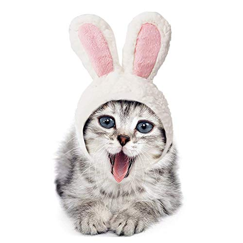 Evereap parrucca da gatto con cappuccio da coniglio, cappello da diadema per gatti, cappello da compagnia divertente,halloween party animale autunno inverno vestire costume