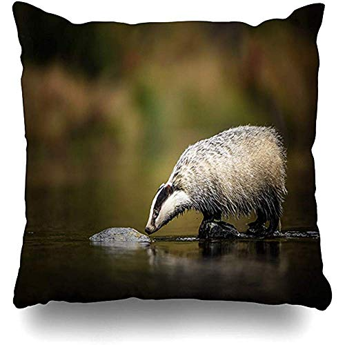 ZB Luxury Pillow Covers,Autumn Green Badger Running Forest Nature Habitat Wild Adult Bath Black Brook Carnivore Claws Design Home Pillow Case Square Zippered Decor Pillowcase,45 * 45 cm