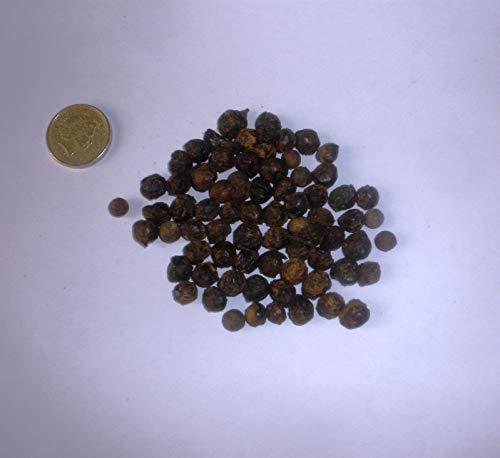 Portal Cool 50: Dwarf Palmetto Palm, Sabal Minor Seeds
