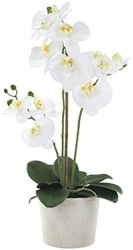 Decoline Künstliche Orchidee - Topf Beige XL - 55cm Blüten weiß