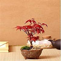 Suchergebnis Auf Amazon De Fur Japanischer Ahorn Baum Garten