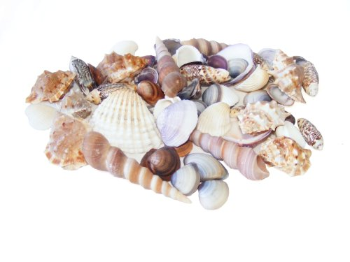 beach-mix-sea-shells-150g-small-and-medium-seashells-by-flowerhour