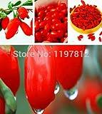 Shopmeeko spedizione gratuita 300 pz sacchetto Barbary Wolfberry Frutta bonsai benefici per la salute Nespola Goji Berry Lycii bonsai