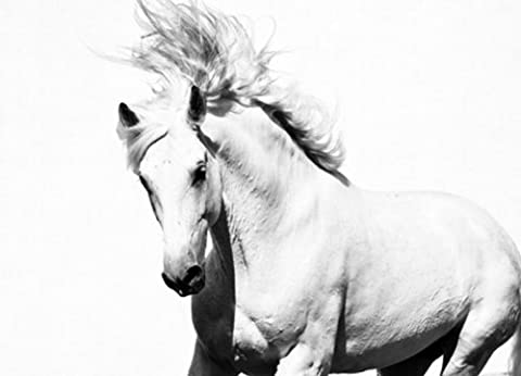 Photo Wallpaper - WHITE HORSE - Wall Mural - MUSTANG 254cm x 183cm wall decoration