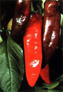 Vistaric Numex Big Jim Chili Pepper 30 Samen - 12 Inches Long!