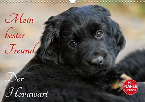 Mein bester Freund - Der Hovawart (Wandkalender 2020 DIN A3 quer): Hovawarte von klein bis groß auf 13 bezaubernden Fotos (Geburtstagskalender, 14 Seiten ) (CALVENDO Tiere) -