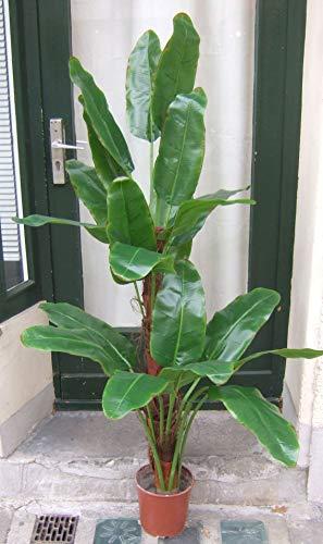 Licht & Grün exclusive Kunstpflanzen Künstliche Bananenpflanze ca. 1,60m -1,70m Spitzen Qualität