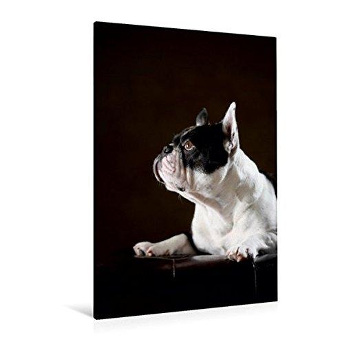Premium Textil-Leinwand 80 cm x 120 cm hoch, Juno, 4 Jahre | Wandbild, Bild auf Keilrahmen, Fertigbild auf echter Leinwand, Leinwanddruck (CALVENDO Tiere) (4 Juno)