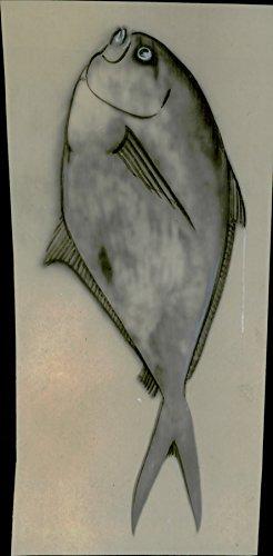 vintage-photo-of-rays-sea-bream-brahma-raji