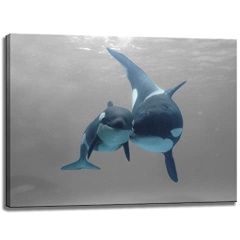 Killer whales in the sea - black / white design with color elements on canvas in the format: 31.5