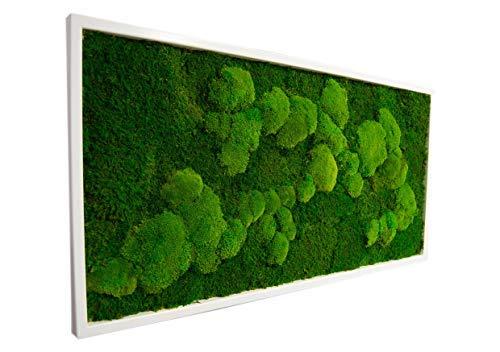 Moosbild Pflanzenbild mit Kugelmoos und Flachmoos versch. Maße günstig (Weiß, 110x55 cm)