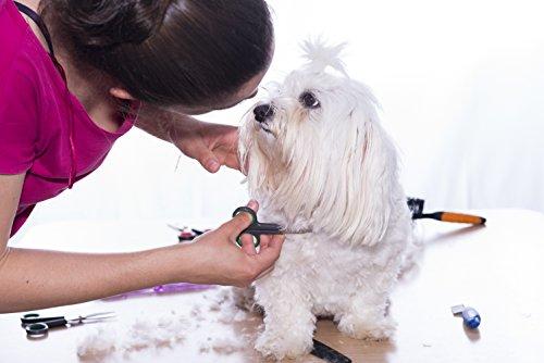 Hundescheren-Set mit Effilierschere zur Fellpflege für alle Hunde | Scheren aus Edelstahl mit abgerundeter Spitze - 6