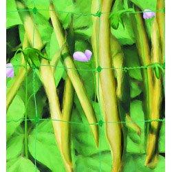 Apollo Pea & Bean net 6m x 2m
