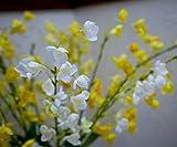 FlowerFest Drops of Jupiter Flower Arrangement
