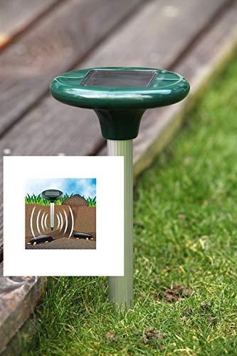 Premium Solar Maulwurfschreck - Ökologischer Maulwurfvertreiber (kabellos) Wühlmausschreck Wühlmausschreck Maulwurf Wühlmaus Vertreiber Wühlmausvertreiber Maulwurfabwehr Wühlmausabwehr