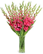 FloraZone Standing Tall Pink Glads in a Glass Vase Same Day Delivery
