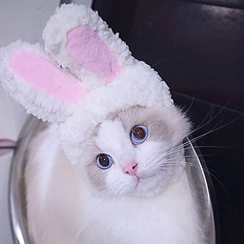 Factorys 2019 Neues Upgrade Katzenmütze,Pet Bunny Hasenohren Für Katzen Kleine Hunde Kätzchen Party Kostüm Accessoire Kopfbedeckungen Niedlich,weich,bequem und einfach zu bedienende (Einfach Bequeme Kostüm)