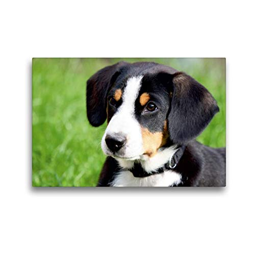 Premium Textil-Leinwand 45 x 30 cm Quer-Format Entlebucher Sennenhund | Wandbild, HD-Bild auf Keilrahmen, Fertigbild auf hochwertigem Vlies, Leinwanddruck von SchnelleWelten